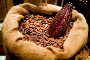 Fermentoidut ja kuivatut kaakaopavut toimitetaan suklaanvalmistajille säkeissä